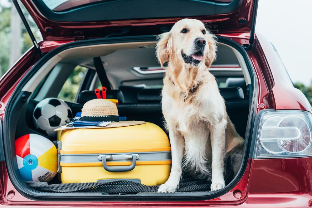 6 pasos que debés seguir para llevar correctamente a tu mascota en el auto | Garantia Plus